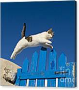 Cat Jumping A Gate Canvas Print