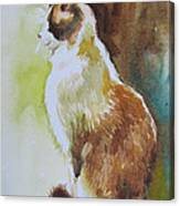 White And Brown Cat Canvas Print