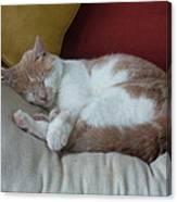 Barn Cat Nap Time Canvas Print