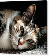Cat Napping In The Sun By David Perry Canvas Print