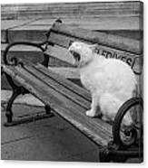 Cat On A Bench Canvas Print