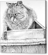 Cat On A Box Canvas Print