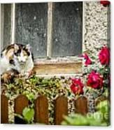 Cat On A Sill Canvas Print
