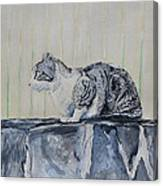 Cat On A Stone Wall Canvas Print