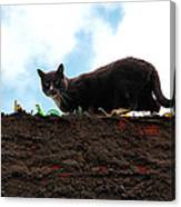 Cat On A Wall Canvas Print