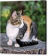Cat On Tree Trunk Canvas Print