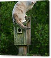 Cat Perched On A Bird House Canvas Print
