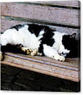 Cat Sleeping On Bench Canvas Print
