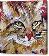 Feline Portrait  Canvas Print