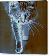 Cat Walking Canvas Print