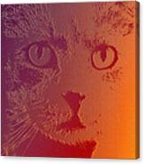 Cat With Intense Stare Abstract  Canvas Print