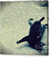 Cat Yoga Canvas Print