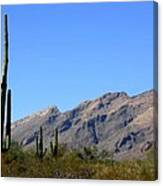 Catalinas Canvas Print