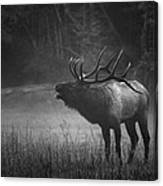 Cataloochee Bull Elk Canvas Print