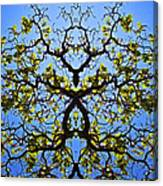 Catalpa Tree Canvas Print