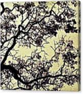 Catalpa Tree Gold Canvas Print