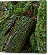 Cataracts Canyon Mossy Log  Canvas Print