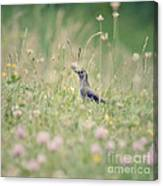 Catbird In The Wildflowers Canvas Print