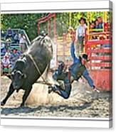 Catching Spur Canvas Print