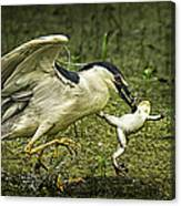 Catching Supper Canvas Print