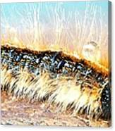 Caterpillar-01 Canvas Print