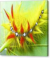 Caterpillar 2 Canvas Print
