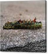 Caterpillar Canvas Print