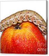 Caterpillar On The Apple. Canvas Print
