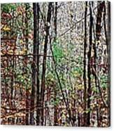 Cathedral In The Woods Canvas Print