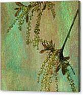 Catkins -- Tree-flowers Canvas Print