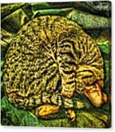 Catnappin' On A Cold Rainy Sunday Canvas Print
