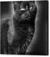 Cats 55 Canvas Print