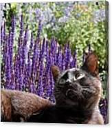 Cats 56 Canvas Print
