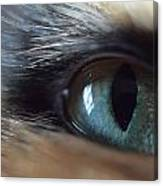 Cat's Eye Canvas Print