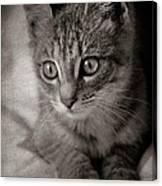Cat's Eyes #05 Canvas Print
