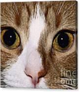 Cats Face Canvas Print