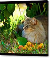 Cat's Mountain Summer Canvas Print