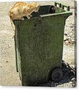 Cats On And In Garbage Container Canvas Print