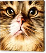 Cat's Perception Canvas Print