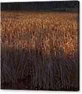 Cattail Bog   #3868 Canvas Print