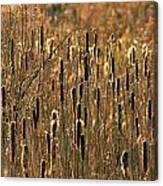 Cattail Marsh Canvas Print