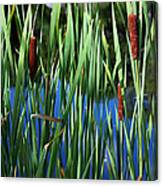 Cattail Pond In Pastel Canvas Print