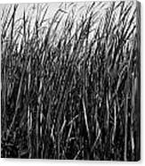Cattail Reed Background Canvas Print