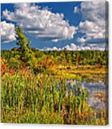 Cattails And Clouds Canvas Print