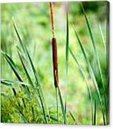 Cattails And Reeds Canvas Print