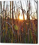 Cattails And Reeds - West Virginia Canvas Print