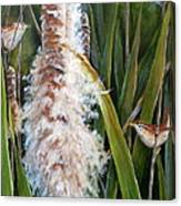 Cattails And Wrens Canvas Print