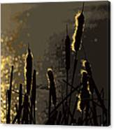 Cattails At Sunset Canvas Print