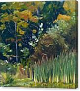 Cattails Canvas Print