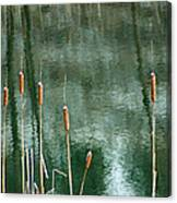 Cattails On Green Canvas Print